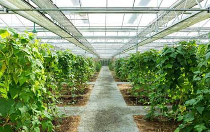Wireless Monitoring and Control Solution for Greenhouse